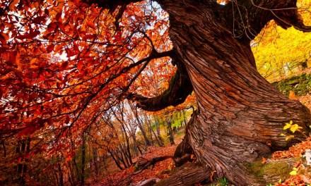 Algunas razones para plantar y cuidar árboles