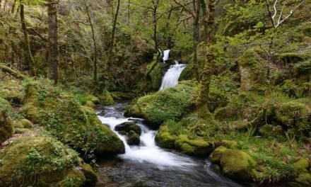 Cómo los bosques curan