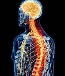 revisa-tu-sistema-nervioso1