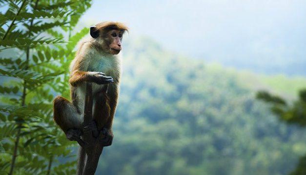 EL SER HUMANO EXTERMINÓ EL 60% DE LOS ANIMALES DE LA TIERRA EN LOS ULTIMOS 40 AÑOS