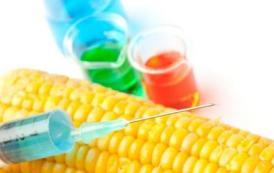 ejemplos de alimentos transgenicos 3 large1 - inicio