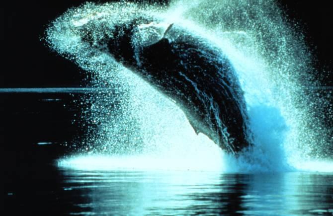 img 23674 - Mayor similitud de lo creído entre el habla humana y los sonidos de ciertos animales