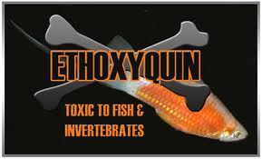 Ethoxyuin - PESCADO TOXICO: UNA CATASTROFE ALIMENTARIA A ESCALA MUNDIAL
