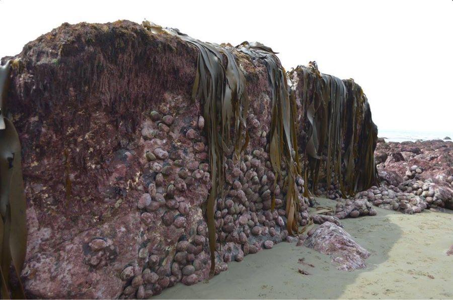 Impresionante imagen muestra el levantamiento del lecho marino. Esto se produjo demasiado rápido.