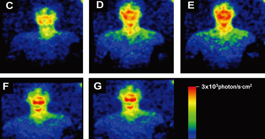 Los seres humanos también emiten luz, aunque no es posible verla con nuestros ojos