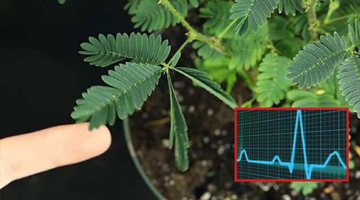 Las plantas pueden contar – La creciente evidencia de que las plantas son conscientes
