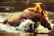 Fergus y el caballo de río, leyenda celta