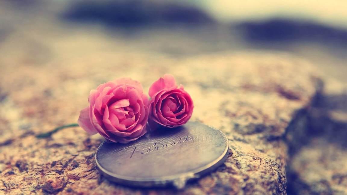 flores para dar a uma pessoa especial