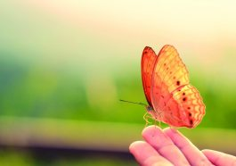 pessoa segurando uma borboleta
