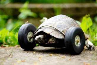 06 - speed turtle