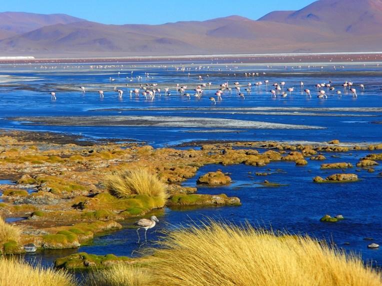 Flamingos na lagoa