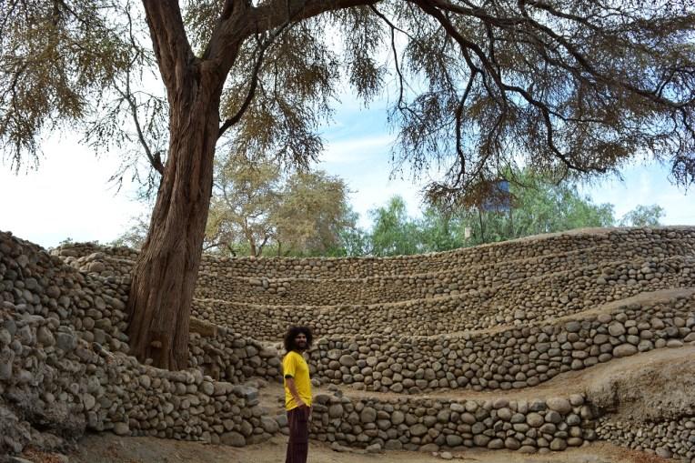 Graças à água no subsolo, estas árvores podem crescer no deserto de Nasca