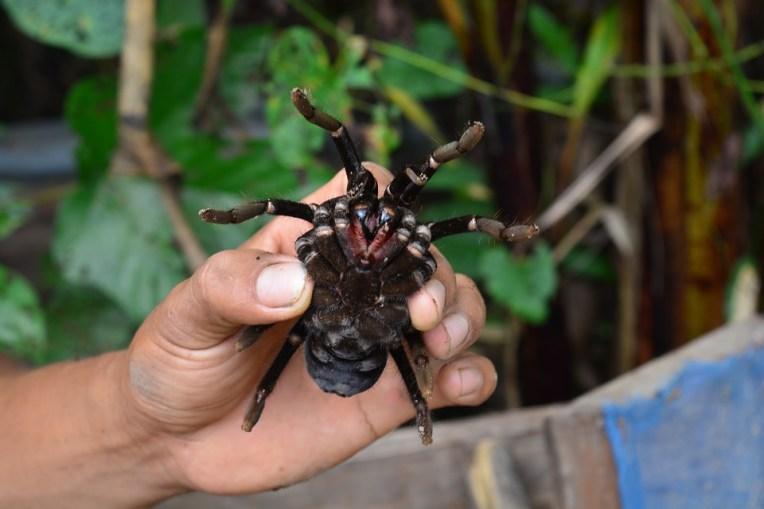 Um dos dóceis aninais que se encontra na selva