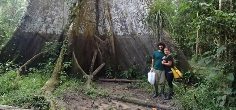 Árvore gigante na Amazônia peruana