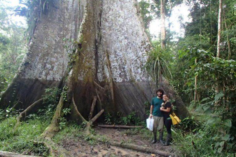 Árvore gigante, de cerca de 700 anos, na selva amazônica