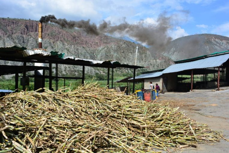 Plantação de cana e processo para fazer rapadura