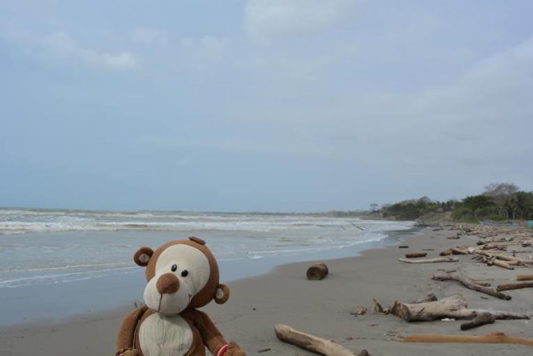 Mucuvinha na praia de Arboletes