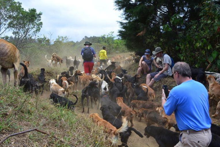 Território de Zaguates, Costa Rica