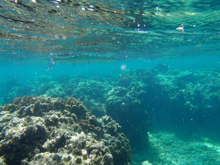 Mergulhando em West Bay