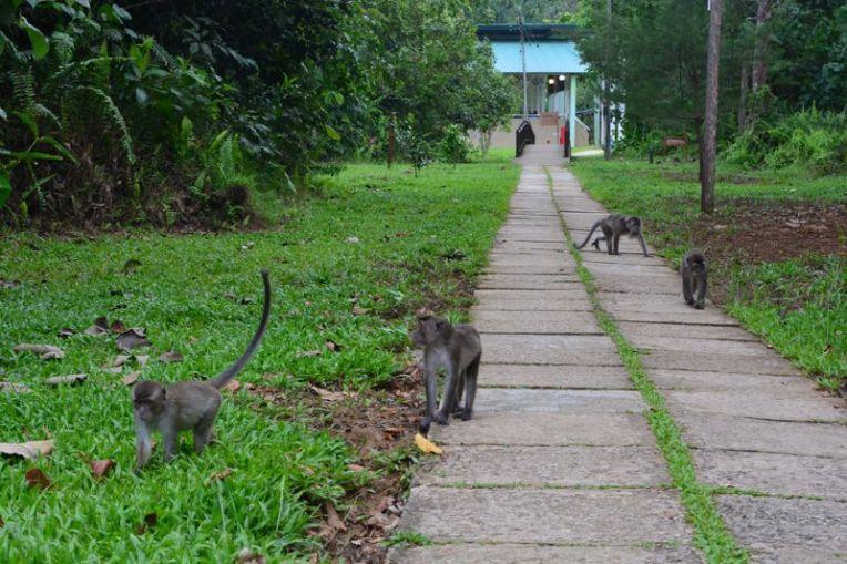 Parque Nacional Bako