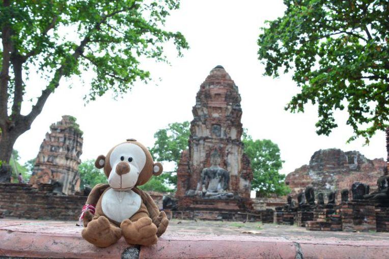 Mucuvinha em Ayutthaya