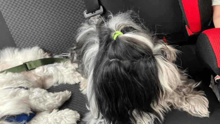 Dicas de viagem com o cachorro