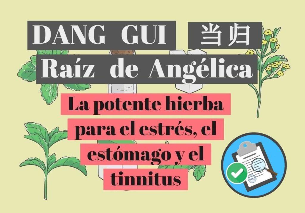 4a61b7b20 DANG GUI   当归   RAÍZ DE ANGÉLICA: la potente hierba para el estrés ...