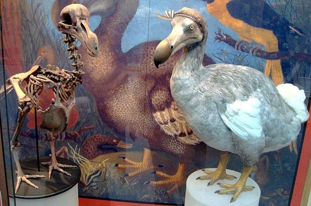 Top 10 animais incríveis que já foram extintos - Dodô