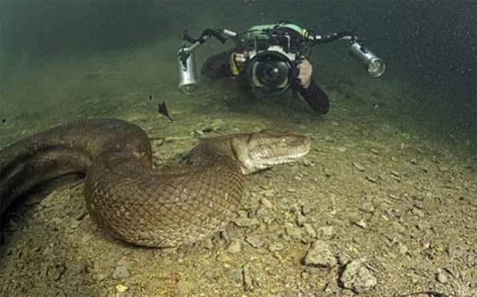 Top 10 animais selvagens fotografados em momentos incríveis