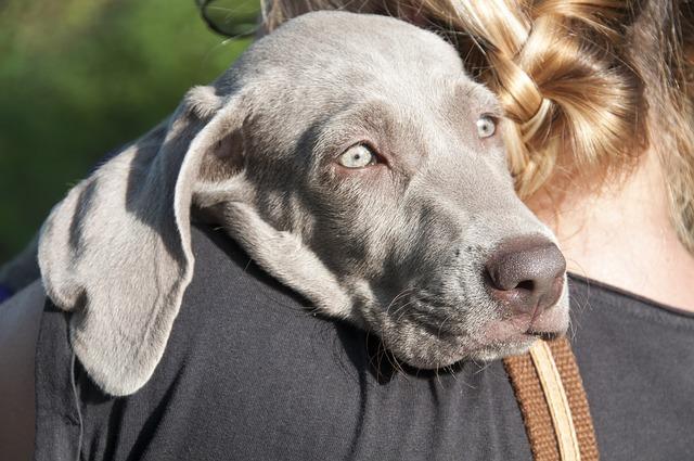 Cãespodem sofrerdepressão