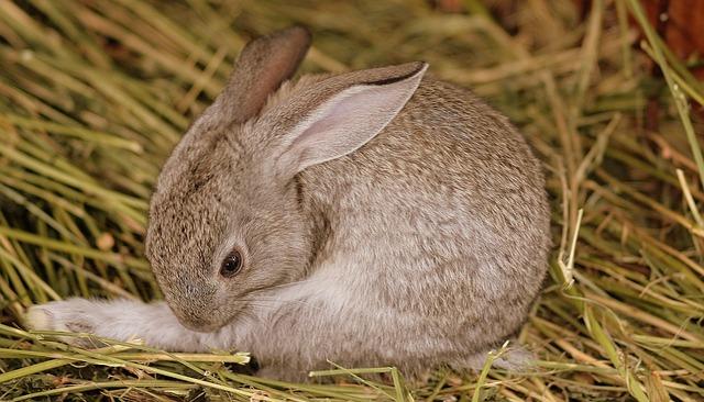 coelhos não devem tomar banho