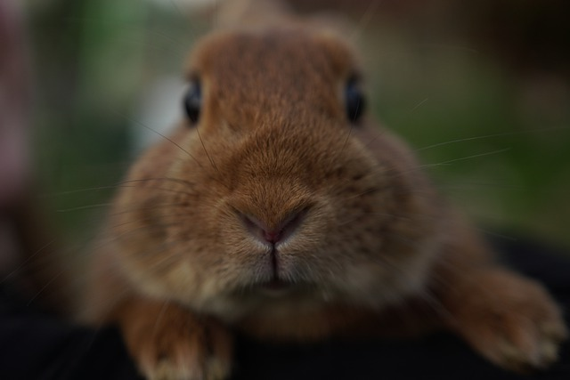 Curiosidades - coelhos podem enxergar quase 360º