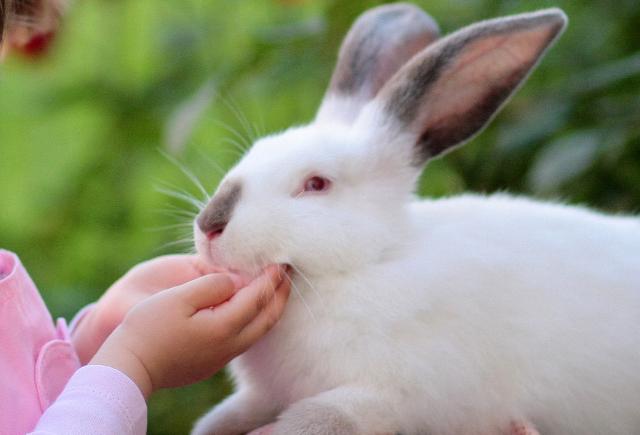 coelhos ronronam