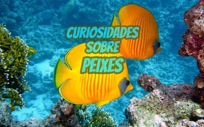 Top 10 curiosidades sobre Peixes