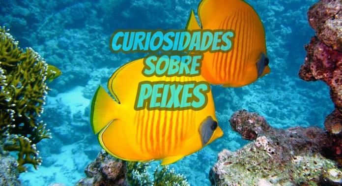 Curiosidades sobre peixes