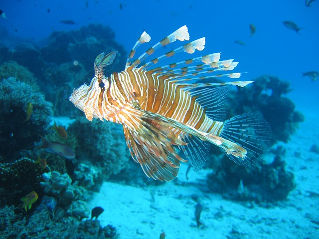 Certas espécies de peixes são venenosas