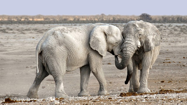 Um elefante ajuda muito mais