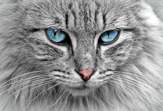 O gato de estimação na antiguidade