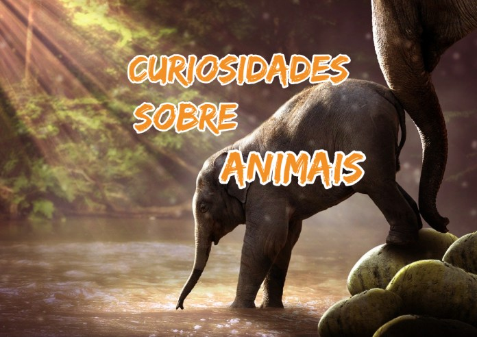 Top 10 curiosidades sobre Animais