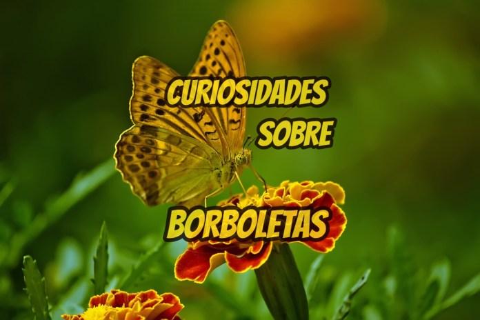 Top 10 curiosidades sobre Borboletas