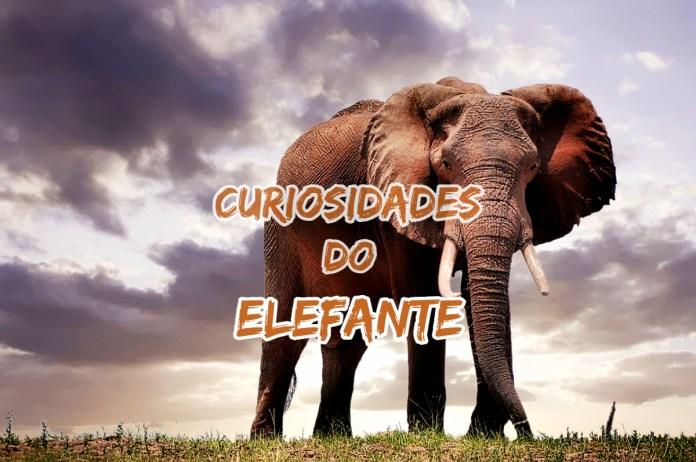 Top 10 curiosidades sobre o Elefante