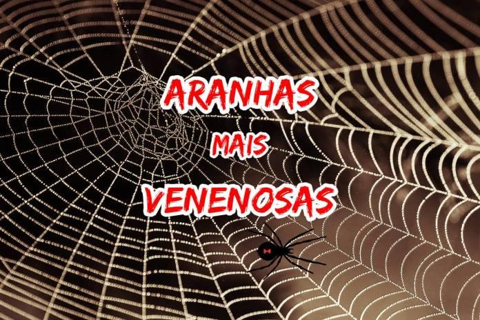 Top 10 aranhas venenosas e mais perigosas do mundo