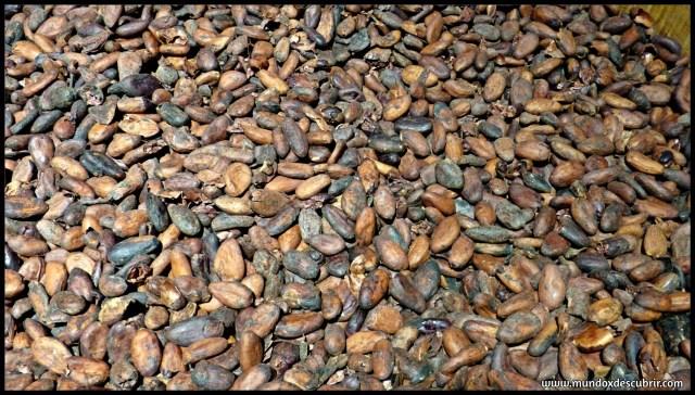 granos de chocolate