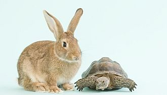 rabbit-and-tortoise-racing.jpg