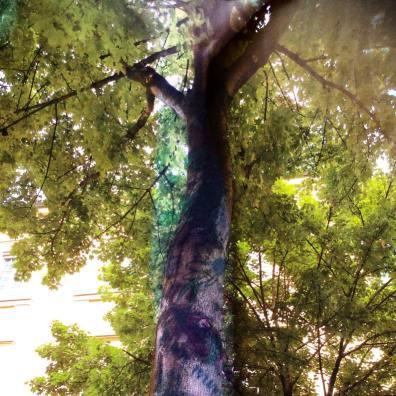 Munich Artists - Katrin Klug - Trees