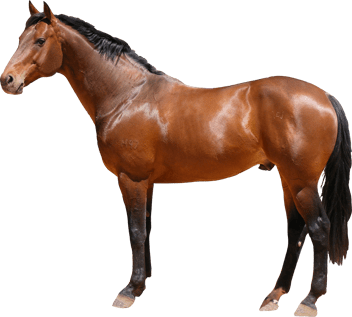 horse_png2558
