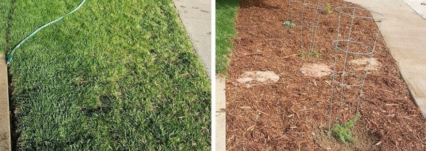 Save water and increase curb appeal by switching from turf grass to California native plants in a front yard. Drought tolerant landscaping.