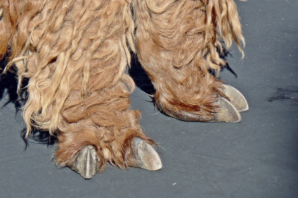 These are jasper's feet, not a Wampa's.