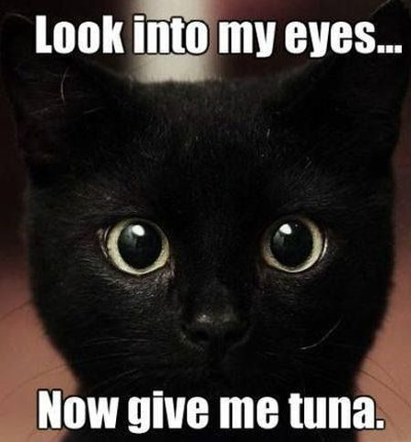25-look-into-my-eyes-cat-meme