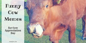 Funny Cow Memes in honor of Cow Appreciation Day. Cow jokes, cow puns, cow cartoons.